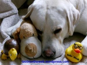 Cooper Moe Blog
